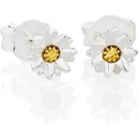 Sterling Silver & Yellow Gold Plated 5mm New Daisy Stud Earrings